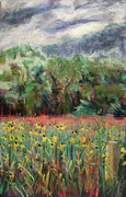 Painted Pastels - Susans before the Rain by Tim  Swagerle