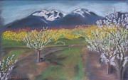 Mountains Pastels Prints - Sutter Buttes In Spring Print by Gitta Brewster
