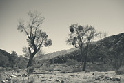 Black And White Nature Landscapes Framed Prints - Suvival Can Be Tough Framed Print by Laurie Search