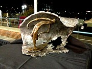 Wave Sculptures - Swaggin by Hunter Brown
