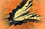 Swallow Tail Vignette Print by Joel Deutsch