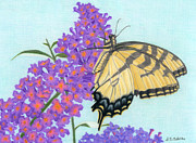 Children Day Drawings - Swallowtail Butterfly And Butterfly Bush by Sarah Batalka