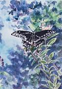 Jan Bennicoff - Swallowtail Butterfly