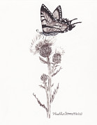 Heather Stinnett - Swallowtail