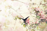 Stephanie Frey - Swallowtail in Spring