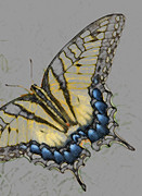 Insects Pastels Posters - Swallowtail Poster by Lonnie Tapia