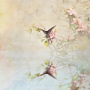 Stephanie Frey - Swallowtail Over Water