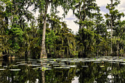 Swamp Prints - Swamp Beauty Print by Janet Fikar