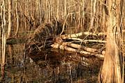 Adam Jewell - Swamp Casualty