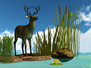 Lilly Pond Digital Art - Swamp Deer by Corey Ford