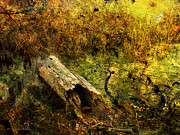 Layered Textures Prints - Swamp Log Print by J Larry Walker