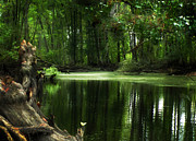 Dappled Light Photos - Swamp River Afternoon by Deborah Smith