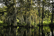 Louisiana Swamp Photos - Swamp Scenery by Janet Fikar