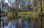 Everglades Metal Prints - Swampy2 Metal Print by Kitty Ellis