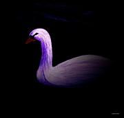 Swan  Print by Annie Zeno