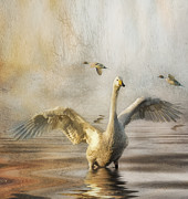 Brian Tarr - Swan at Sundown