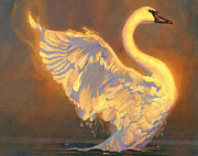 Flight Painting Posters - Swan Poster by Douglas Girard