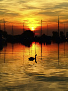 Kim Shatwell-Irishphotographer - Swan in the Sunset