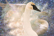 Sympathy Metal Prints - Swan Journey Metal Print by Kathy Bassett