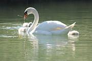 Rogerio Mariani - Swan lake
