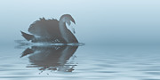 Black Swans Metal Prints - Swan Lake Metal Print by Sharon Lisa Clarke