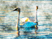 Swans... Mixed Media - Swan Light by Claire Bull