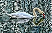 Swan On Lake Eola By Diana Sainz Print by Diana Sainz