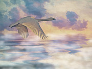 Iain S Byrne - Swan Over Water