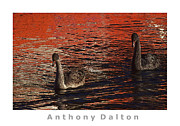Swans... Mixed Media - Swans in a sea of red by Anthony Dalton