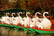 James Kirkikis Art - Swans in Boston Common by James Kirkikis