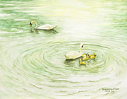 Swans... Paintings - Swans in St. Pierre by Mary Ann King