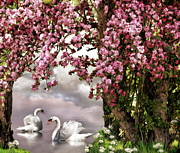 Apple Blossoms Mixed Media Prints - Swans in the spring Print by Susan Schwarting