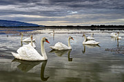 Mystical Art - Swans by Ivan Slosar
