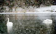Swans Art - Swans on snowy lake winter landscape by adSpice Studios