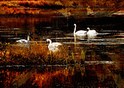 Swans... Mixed Media - Swans on Tern Lake Alaska by Ruth King