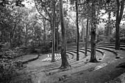 Campus Landscape Framed Prints - Swarthmore College Amphitheater Framed Print by University Icons