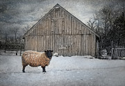 Sheep Posters - Sweater Weather Poster by Robin-lee Vieira