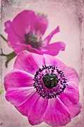 Pink Blossoms Mixed Media Posters - Sweet Anemone Poster by Angela Doelling AD DESIGN Photo and PhotoArt