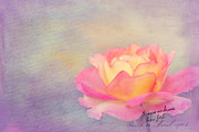 Textured Florals Prints - Sweet are the Memories Print by Reflective Moments  Photography and Digital Art Images