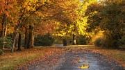Darlene Bushue - Sweet Autumn Moments