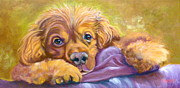 Spaniel Greeting Card Drawings - Sweet Boy Rescued by Susan A Becker