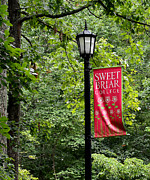 Lamp Post Prints - Sweet Briar College lamp post Print by Todd Hostetter
