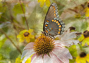 Jeff Swanson Metal Prints - Sweet Butterfly Metal Print by Jeff Swanson