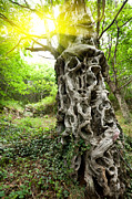 Sculpted Tree Photos - Sweet chestnut tree trunk by Stephane Bidouze