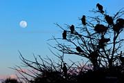 Michelle Wiarda - Sweet Dreams