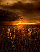 Phil Koch Framed Prints - Sweet Dreams Framed Print by Phil Koch