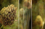 Margaret Hormann Bfa Metal Prints - Sweet Garlic Metal Print by Margaret Hormann Bfa