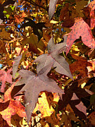 Janet Felts Art - Sweet Gums in the Fall by Janet Felts
