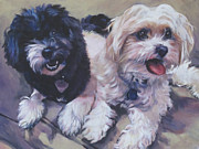 Havanese Framed Prints - Sweet Havanese Framed Print by Lee Ann Shepard