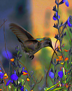Bird Art Originals - Sweet Iridescence by Byron Fli Walker